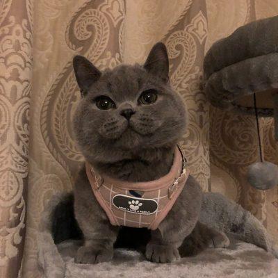 Heavy Duty Cute Cat or Kitten Harness 15+ Colours  4